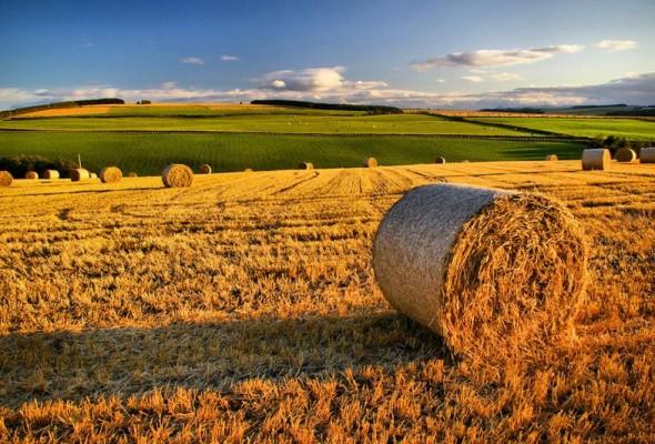 Senato: approvato ddl sulla competitività del settore agricolo