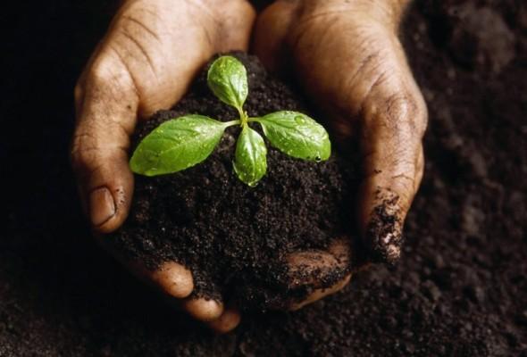Camera, approvato ddl sull'agricoltura sociale