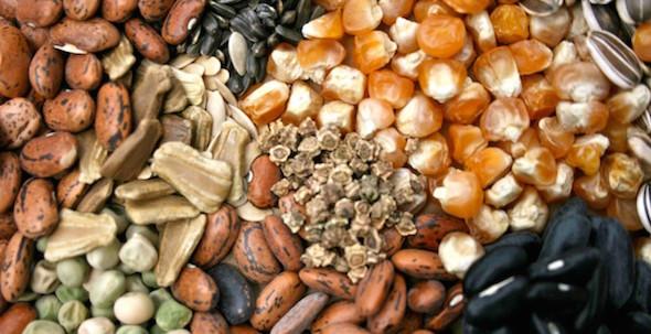 Senato: approvato il ddl sulla biodiversità agraria e alimentare