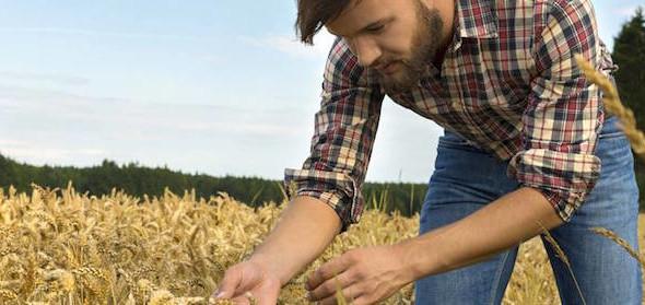 La Regione Toscana sostiene i giovani agricoltori