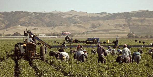 Camera approva la nuova legge che contrasta il caporalato in #agricoltura