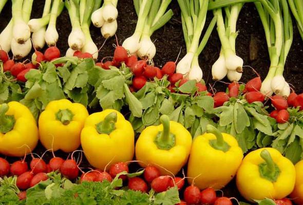 Camera: approvato ddl sulla biodiversità agraria