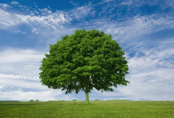 Senato: approvato il ddl sul Sistema nazionale a rete per la protezione dell'ambiente